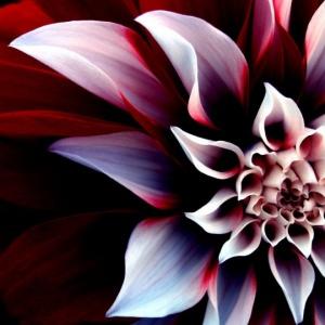 amazingflower